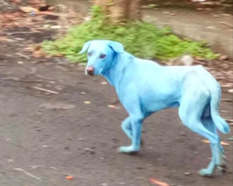 Manufacturing Waste Blamed For Turning Dogs Blue