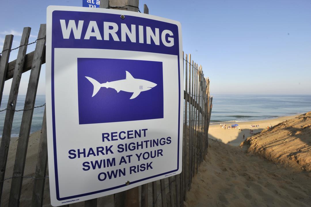 Swimmer Injured in Cape Cod Shark Attack