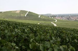 A view of Champagne vineyards near Epernay, eastern France.