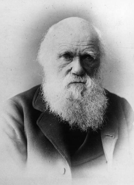 the catholic churchs views on darwins theory of evolution