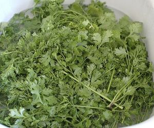 Cilantro, used by monks to stem sexual urges.
