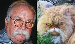 From 5 Cats That Look Like Wilford Brimley