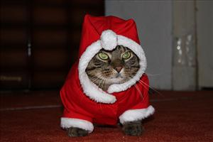 See, cats love Christmas too.