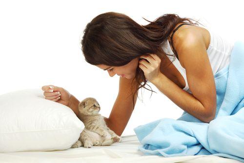 Примета кошка беременная