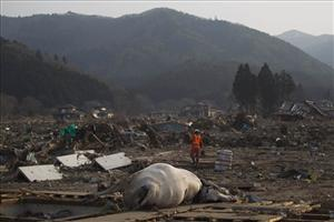 A Japanese rescue team member walks through the completely leveled village of Saito in northeastern Japan Monday, March 14, 2011.