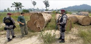 Brazilian soldiers inspect wood seized from a clandestine sawmill near the Jamanxim National Forest, in the Amazon state of Para.
