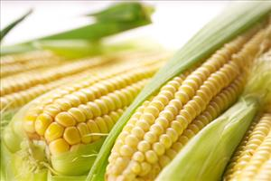 Corn prices could be 180% higher by 2030.
