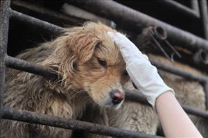A Chinese animal lover consoles a dog after a convoy of trucks carrying some 500 dogs to be sold as meat, were stopped along a highway in Beijing on early April 17, 2011.