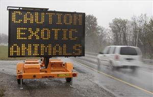 A sign warning motorists that exotic animals are on the loose rests on I-70 Wednesday near Zanesville, Ohio.