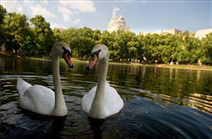 The swans-a-swimming are the most expensive gifts on the Twelve Days of Christmas list.