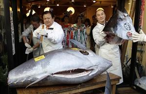 Kiyoshi Kimura, president of Kiyomura Co., left, cuts a bluefin tuna in front of his Sushi Zanmai restaurant near Tsukiji fish market in Tokyo Thursday, Jan. 5, 2012.