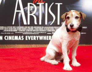 Uggie, who was awarded the Palm Dog at the Cannes Film Festival for his role in The Artist, attends a special screening in London this month.