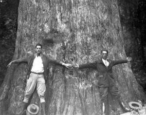 In this 1920s photo from the Florida State Archives, two men stand together and spread their arms to give an indication of the size of The Senator.