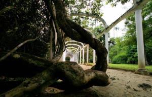 Picture taken on February 19, 2008 at Rio de Janeiro's Botanic Garden.