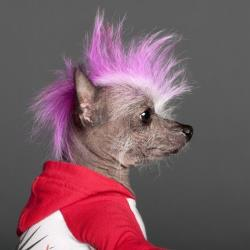 Dog grooming has gone punk.