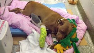 Lilly is recovering at Boston's Angell Animal Medical Center.