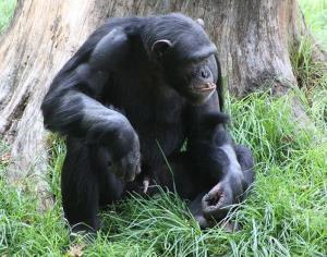 A monkey's uncle.