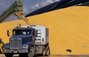 In this photo taken March 2008, a grain transport truck is loaded up with corn in Curran, Ill.