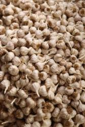 Police found about 9.5 tons of stolen garlic in three vans attempting to cross into Hungary today.