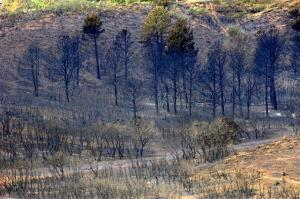 This Sunday, July 1, 2012, photo, shows burned landscape near the Mountain Shadows area near Colorado Springs, Colo.