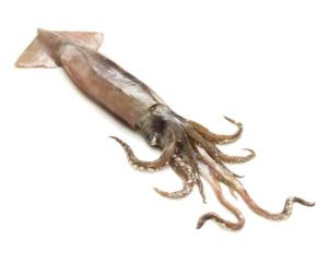 This squid looks pretty tired.