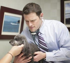 In an undated photo provided by Broad Street Veterinary Hospital, veterinarian Jason Hiser of Virginia works with a dog.
