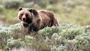 Animals of Montana provides grizzly bears, lions, and other animals for movies and photography shoots.