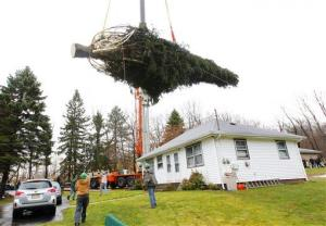 Crews hoist the Norway Spruce from its base in Flanders, NJ, Tuesday. The tree will be this year's Rockefeller Center Christmas Tree.