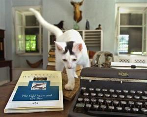 Patches, one of more than 60 cats in residence at the Ernest Hemingway Home & Museum in Key West, Fla., prowls through the late author's writing room in this Saturday, July 13, 2002 file photo.