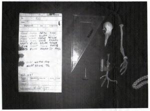 This photo shows the skeletal remains of a pigeon discovered in the chimney of a house in southern England which carried a mysterious, long-forgotten message from World War II.