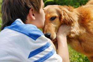A boy kisses a golden retriever.
