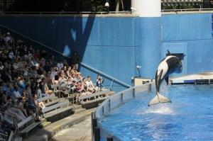 In this March 7, 2011, file photo, park guests watch as a killer whale flips out of the water at SeaWorld Orlando's Shamu Stadium in Orlando, Fla.