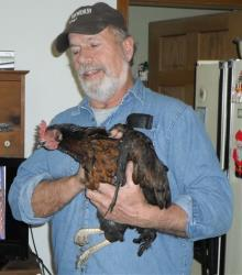 In this photo provided by Barb Murray, Brad Krueger of Alma Center, Wis., holds his neighbors' chicken, Cluck Cluck, on Friday, Dec. 28, 2012. The chicken, which the neighbors kept as a pet, is being credited for saving that family from an early-morning fire Thursday by waking the couple with...