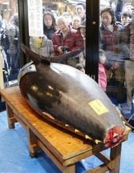 People look at a bluefin tuna displayed at Sushi Zanmai restaurant in Tokyo Saturday.