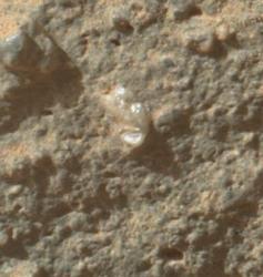 A Martian Flower?