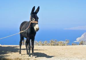 A donkey awaits his owner.
