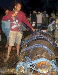 In this Sunday Sept. 4, 2011 file photo,  police and residents pose with a huge crocodile, later named Lolong.