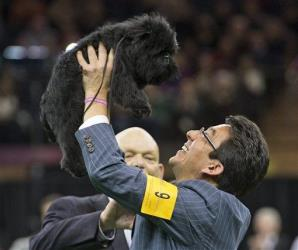 Ernesto Lara celebrates with Banana Joe, an affenpinscher, who won Best in Show, during the 137th Westminster Kennel Club dog show, Tuesday, Feb. 12, 2013, at Madison Square Garden in New York.