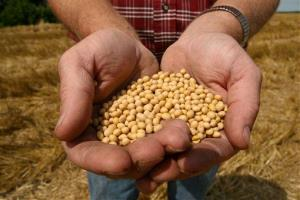 This July 5, 2008 file photo shows a farmer holding Monsanto's Roundup Ready Soy Bean seeds at his family farm in Bunceton, Mo.