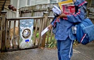 US Postal Service letter carrier of 12 years, Jamesa Euler, encounters a barking a dog while delivering mail, Thursday, Feb. 7, 2013, in Atlanta.