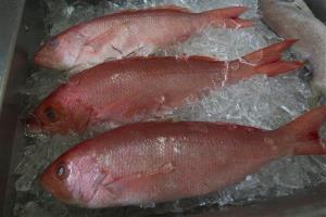 Fresh red snapper is iced and ready for sale in Bon Secour, Ala., Wednesday, May 16, 2012.