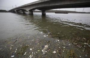 A dead pig floats on the river Monday, March 11, 2013 on the outskirts of Shanghai, China. A recent surge in the dumping of dead pigs upstream from Shanghai - with more than 2,800 carcasses floating into the financial hub through Monday - has followed a police campaign to...