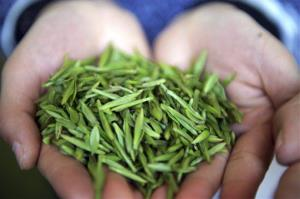 A girl holds up tea leaves collected from a tea plantation fertilized with panda droppings in Ya'an in southwest China's Sichuan province on March 17, 2012.