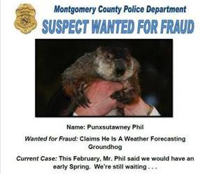 Phil is perhaps America's most wanted groundhog. (Photo altered slightly to reduce negative space.)