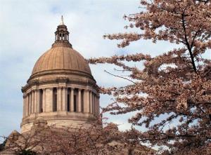 The Washington state Capitol dome is seen through cherry blossom trees that have started to bloom, on Monday, March 25, 2013, in Olympia, Wash.