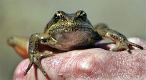 A new survey doesn't bode well for amphibians.