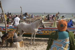 People and animals mingle on a fishing beach on the Atlantic Ocean, in Saint-Louis, Senegal, Sunday, May 19, 2013.