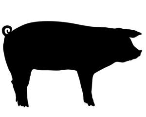 A trio of Swedish women went after an ex-boyfriend with a pig's head, police say.