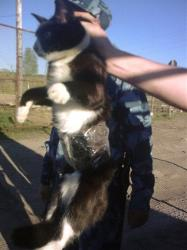 Guards show a cat caught on a clandestine mission at Penal Colony No. 1 near the city of Syktyvkar in Russia's north.