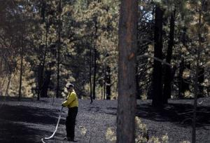 A firefighter douses hot spots off Hodgen Road as crews continue battling the Black Forest wildfire Saturday, June 15, 2013, near Colorado Springs, Colo.